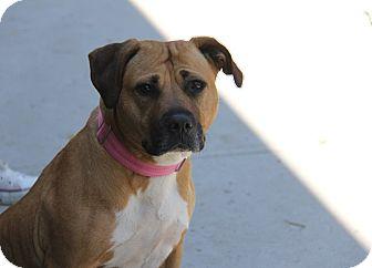 Labrador Retriever Mix Dog for adoption in Brookhaven, New York - Mama