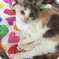 Adopt A Pet :: Baby Doll - Modesto, CA
