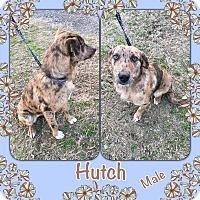 Adopt A Pet :: Hutch meet me 2/17 - Manchester, CT