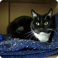 Adopt A Pet :: Spice - Fayetteville, NC