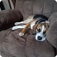 Adopt A Pet :: Mandoline - Laingsburg, MI