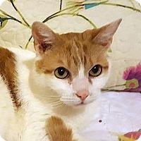 Adopt A Pet :: TINKER - Hamilton, NJ