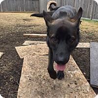 Adopt A Pet :: QUARRY - Winnipeg, MB