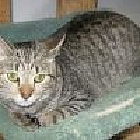Adopt A Pet :: Horatio - Powell, OH