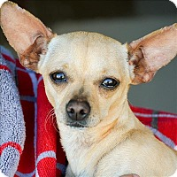 Adopt A Pet :: Mitzi - Vallejo, CA