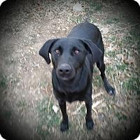 Adopt A Pet :: Geneva - Greeley, CO