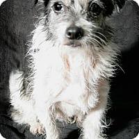 Adopt A Pet :: Hobo - Lufkin, TX
