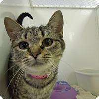 Adopt A Pet :: Bethany - Medina, OH
