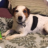 Adopt A Pet :: Toby In Oklahoma - Oklahoma City, OK