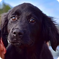 Adopt A Pet :: Merlin - New Canaan, CT
