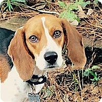 Adopt A Pet :: Freddy - Houston, TX