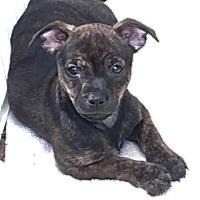 Adopt A Pet :: Veronica - Gainesville, FL