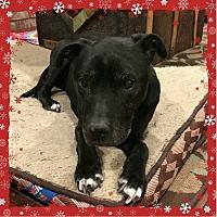 Adopt A Pet :: Bobina - Greeley, CO