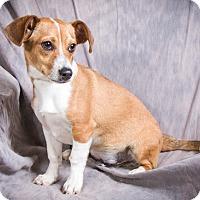 Adopt A Pet :: LANDON - Anna, IL