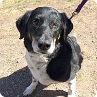 Adopt A Pet :: Jenna - Kansas City, MO