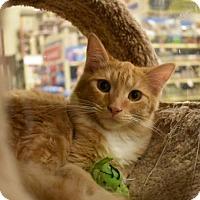 Adopt A Pet :: sol - San Jose, CA