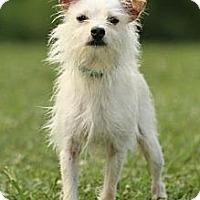 Adopt A Pet :: Bumble - Knoxville, TN