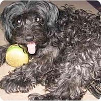 Adopt A Pet :: Desophina (Desi) - Madison, WI