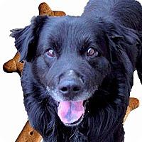 Adopt A Pet :: George womens dog - Sacramento, CA