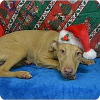 Adopt A Pet :: Atticus - Eden, NC