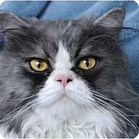 Adopt A Pet :: Montana - Columbus, OH