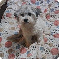 Adopt A Pet :: Libby - Nuevo, CA