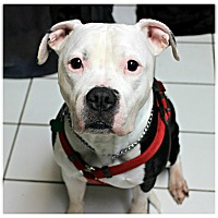 Adopt A Pet :: Sammy - Forked River, NJ