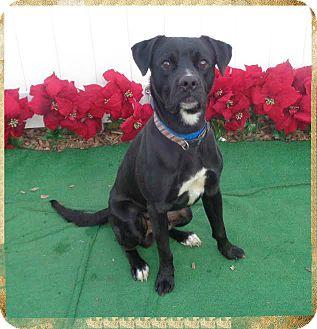 Labrador Retriever Mix Dog for adoption in Marietta, Georgia - JAMEY