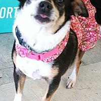 Adopt A Pet :: Kukee - Phoenix, AZ