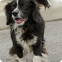 Adopt A Pet :: Lucky - Westminster, MD