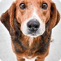 Adopt A Pet :: Randy - Prince George, VA