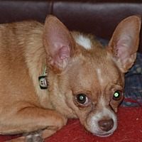 Adopt A Pet :: Houdini  1 Year - C/S & Denver Metro, CO