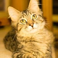 Adopt A Pet :: Kahlua - Renfrew, PA