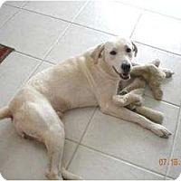 Adopt A Pet :: Charlie - Altmonte Springs, FL