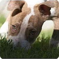 Adopt A Pet :: Jasper - DFW, TX