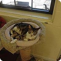 Adopt A Pet :: Camilla - Lake Charles, LA