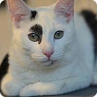 Adopt A Pet :: LeftEye - Brooklyn, NY