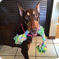 Adopt A Pet :: Rosi--pending - New Richmond, OH
