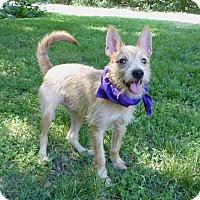 Adopt A Pet :: Rocco - Mocksville, NC