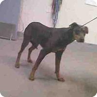 Adopt A Pet :: Lana - Tracy, CA