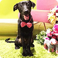 Adopt A Pet :: Queenie - Castro Valley, CA