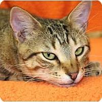 Adopt A Pet :: Magic - Naples, FL