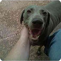 Adopt A Pet :: Duchess  **ADOPTED** - Eustis, FL