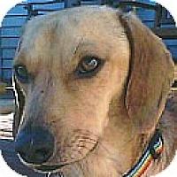 Adopt A Pet :: Duncan - VA - Jacobus, PA