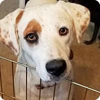 Adopt A Pet :: Shiner - San Antonio, TX