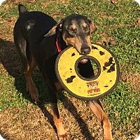 Adopt A Pet :: Princess - Arlington, VA