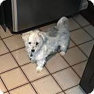 Adopt A Pet :: Karli