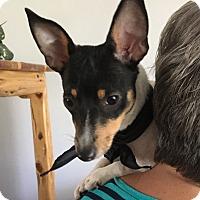Adopt A Pet :: Shelly in San Antonio - San Antonio, TX