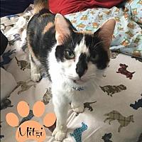 Adopt A Pet :: Mitzi - Des Moines, IA