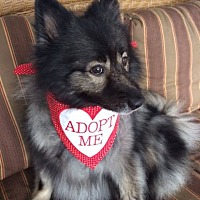 Adopt A Pet :: MADI--ADOPTED WITH KATIE! - Southern California, CA